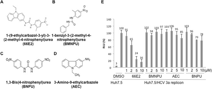 A screen for novel hepatitis C virus RdRp inhibitor identifies a