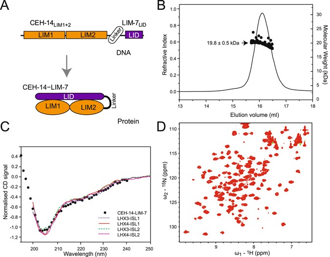 Interactions between LHX3- and ISL1-family LIM-homeodomain