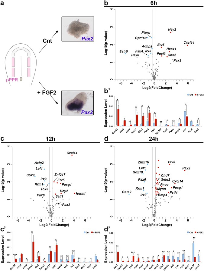 A gene network regulated by FGF signalling during ear