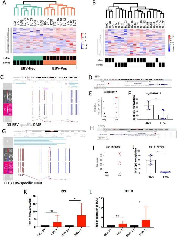 Viral driven epigenetic events alter the expression of