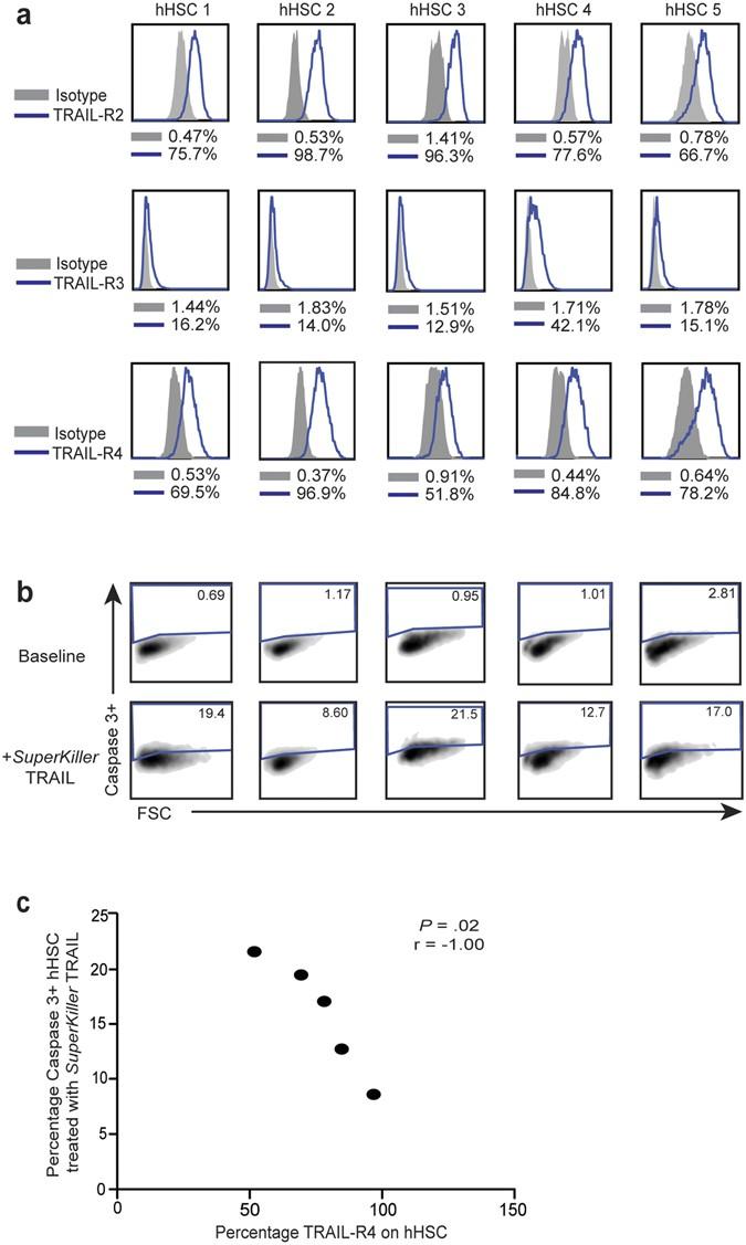 TRAIL regulatory receptors constrain human hepatic stellate cell