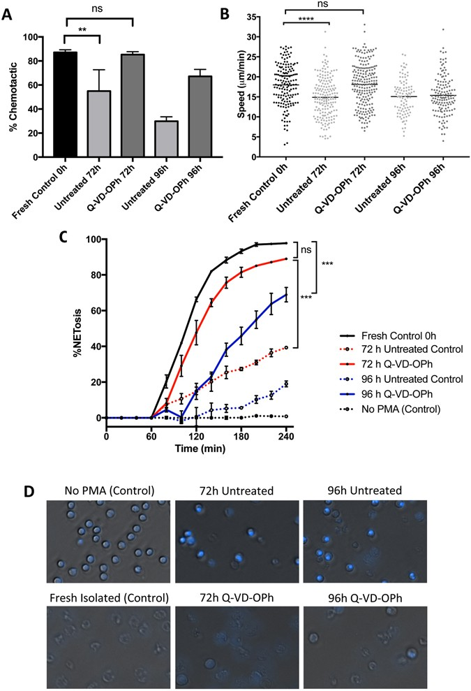 Preservative solution that stabilizes erythrocyte morphology and