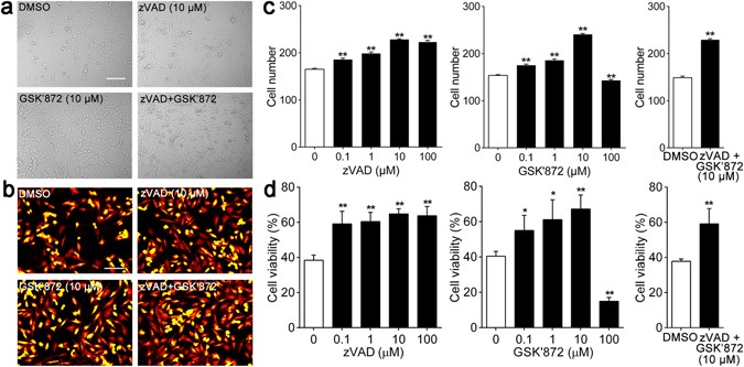 Hypoxia-inducible factor-1 alpha is involved in RIP-induced
