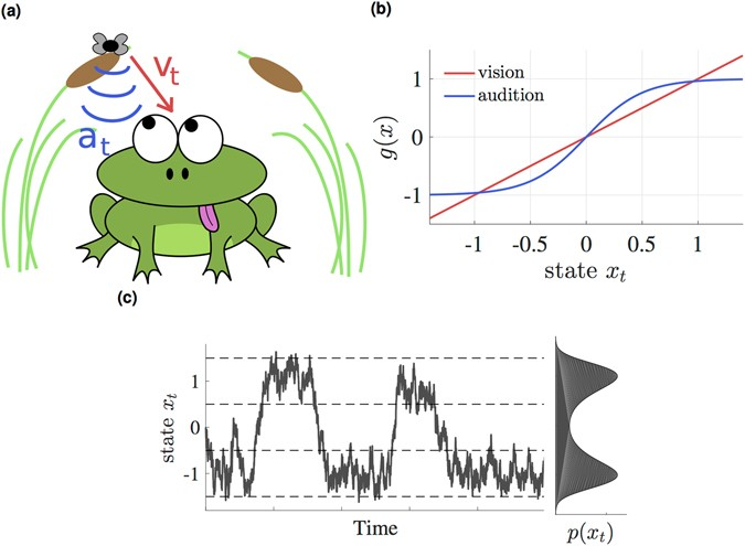 Nonlinear Bayesian filtering and learning: a neuronal