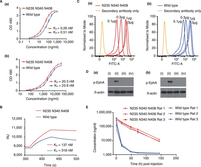 Glycoengineering of EphA4 Fc leads to a unique, long-acting