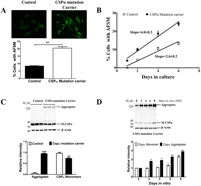 Primary fibroblasts from CSPα mutation carriers recapitulate