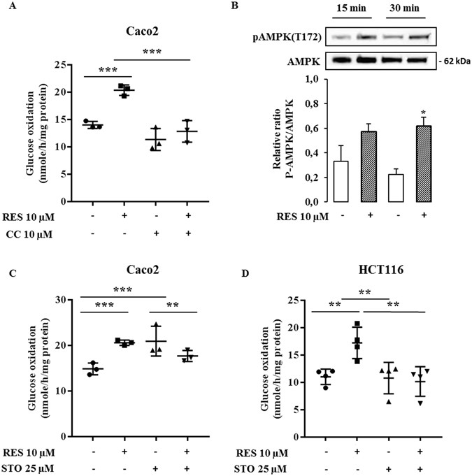 Resveratrol Reverses The Warburg Effect By Targeting The Pyruvate Dehydrogenase Complex In Colon Cancer Cells Scientific Reports