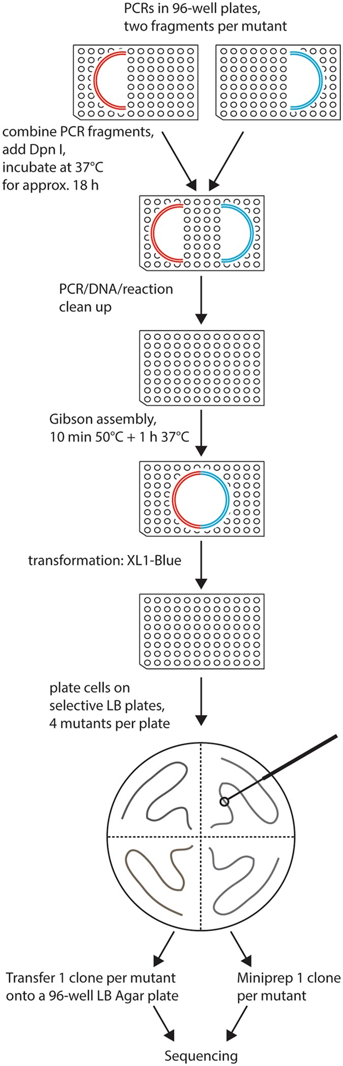 High-throughput mutagenesis using a two-fragment PCR