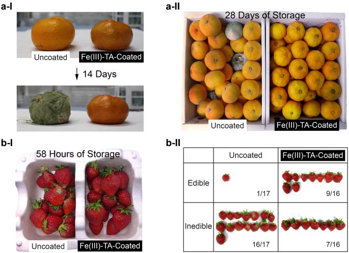 Antimicrobial spray nanocoating of supramolecular Fe(III