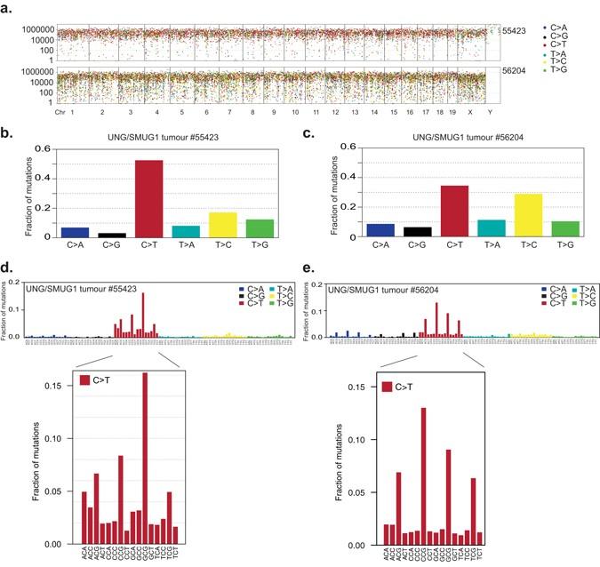 Uracil Accumulation and Mutagenesis Dominated by Cytosine