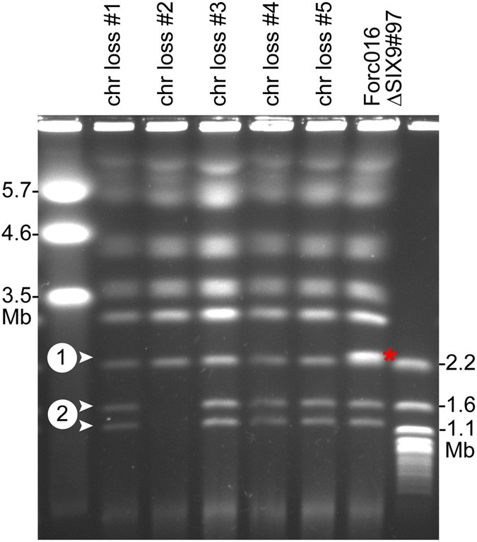 A mobile pathogenicity chromosome in Fusarium oxysporum for