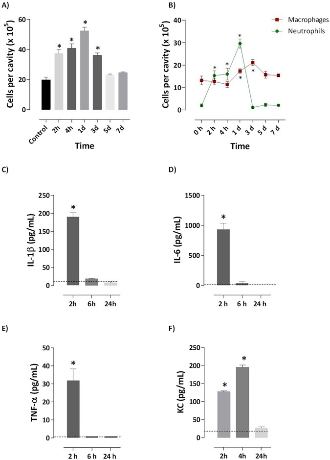 stingray venom induces neutrophilia with a peak at 24 h after injection  at  different time points (2 and 4 h, 1, 3, 5 and 7 days) after i p  injection  of