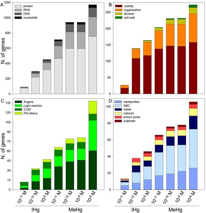 Cellular toxicity pathways of inorganic and methyl mercury