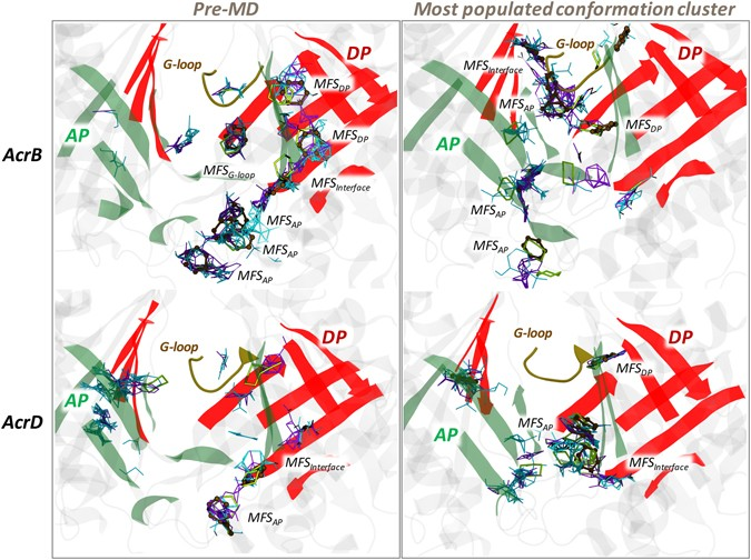 Molecular Rationale behind the Differential Substrate