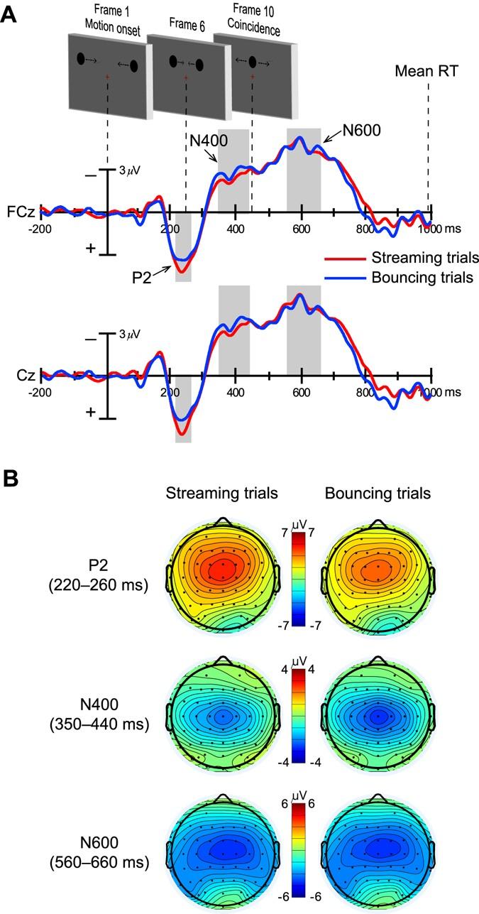 Pre-coincidence brain activity predicts the perceptual