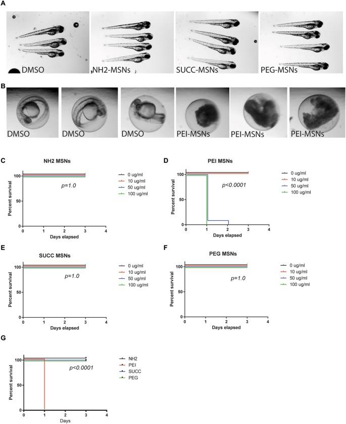 Analyses in zebrafish embryos reveal that nanotoxicity profiles are