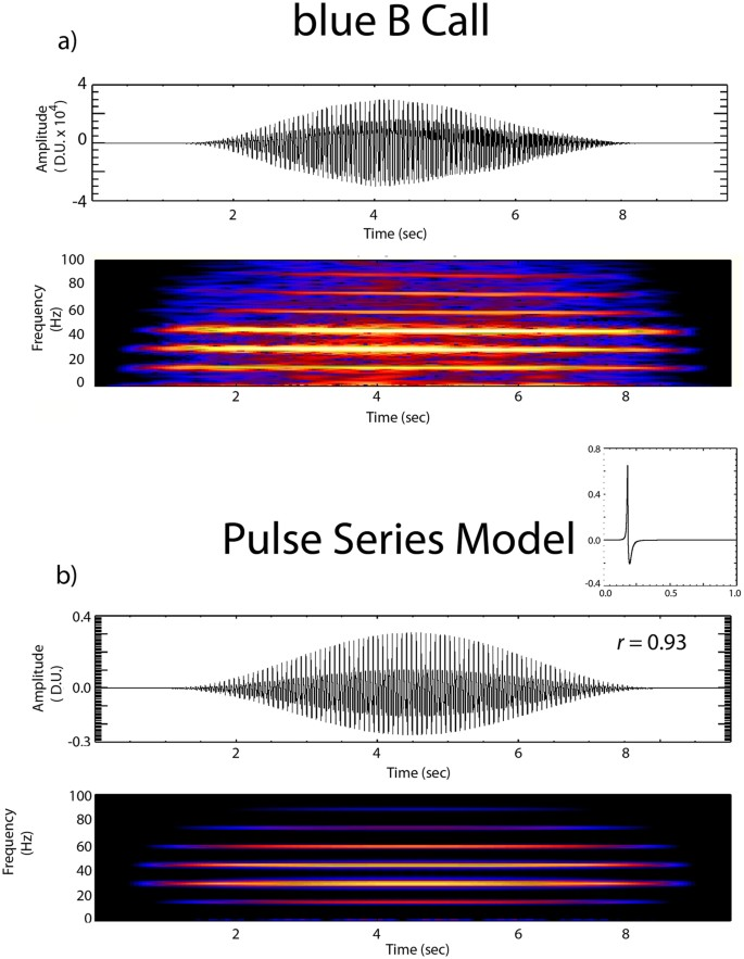 A pulsed-air model of blue whale B call vocalizations | Scientific
