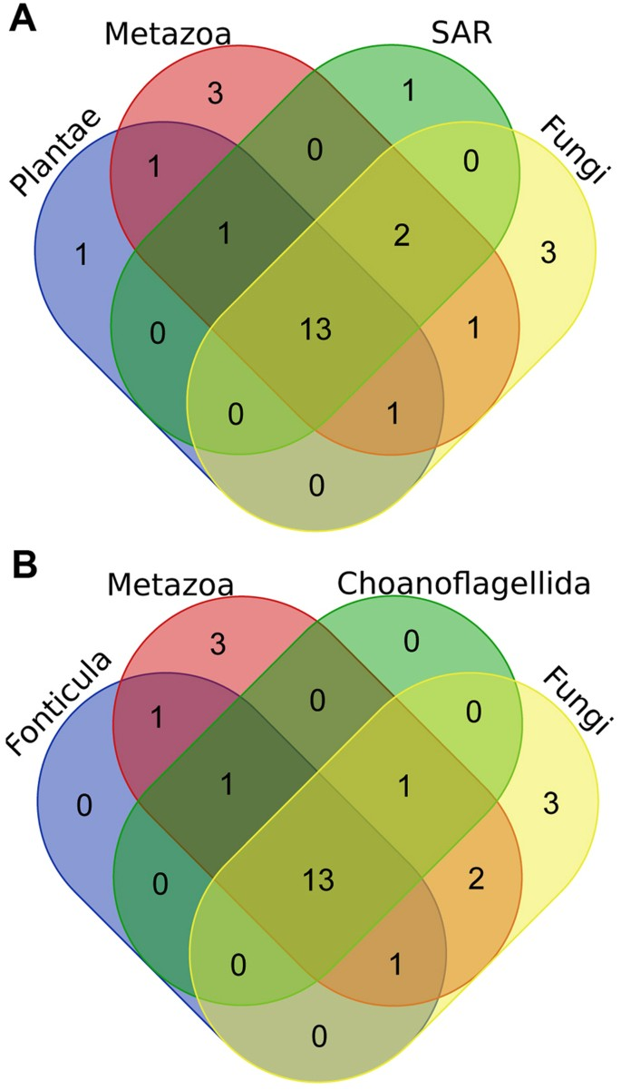 fungal lifestyle reflected in serine protease repertoire