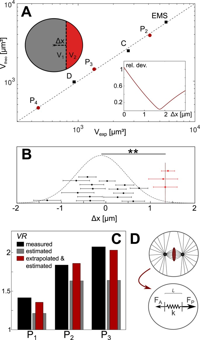 Physical determinants of asymmetric cell divisions in the