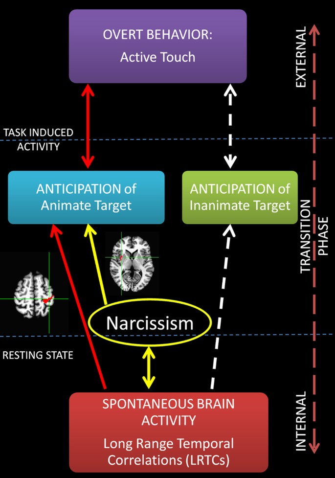 How spontaneous brain activity and narcissistic features
