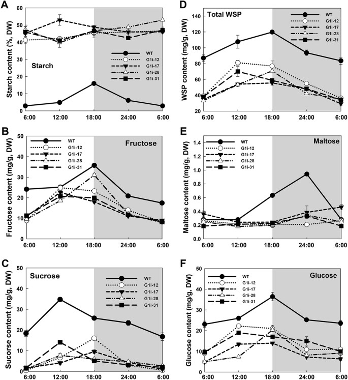 Alpha-Glucan, Water Dikinase 1 Affects Starch Metabolism and