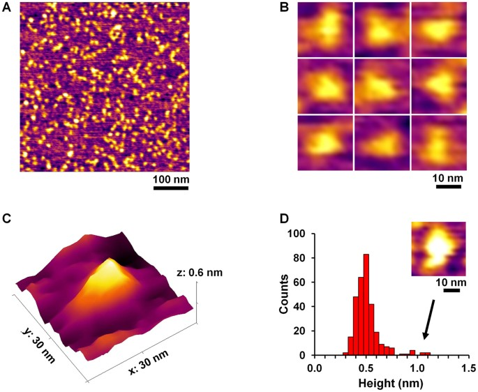 Modular assembly of a protein nanotriangle using orthogonally