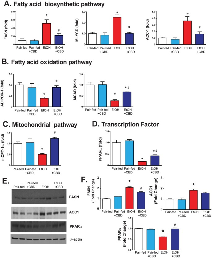 Cannabidiol attenuates alcohol-induced liver steatosis, metabolic