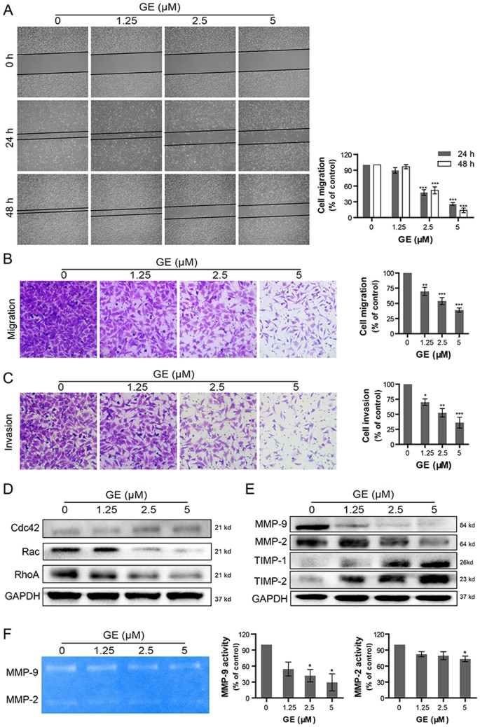 Garcinone E induces apoptosis and inhibits migration and invasion in