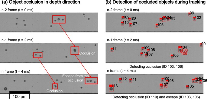 Real-time Image Processing for Microscopy-based Label-free Imaging