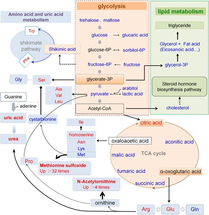 Metabolomics differences between silkworms ( Bombyx mori