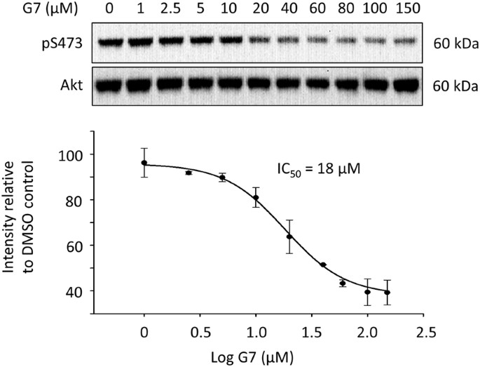 Identification of 4-phenylquinolin-2(1 H )-one as a specific