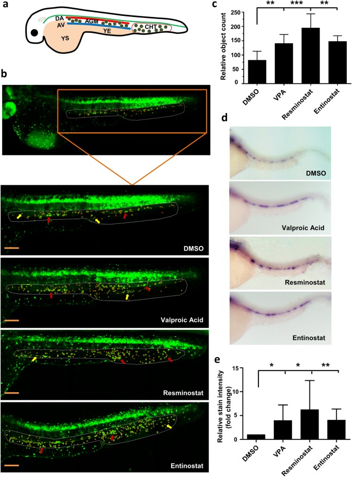 Zebrafish In-Vivo Screening for Compounds Amplifying Hematopoietic