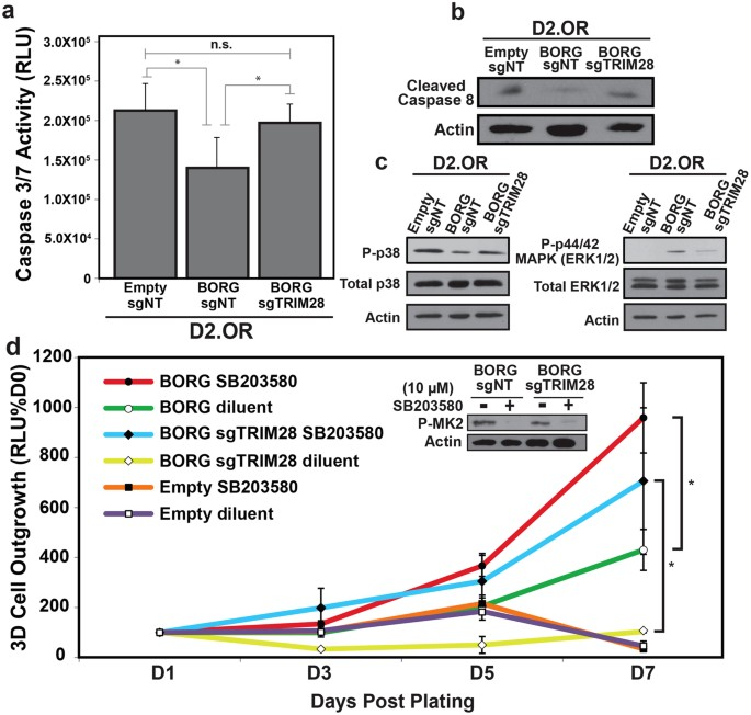 The lncRNA BORG Drives Breast Cancer Metastasis and Disease