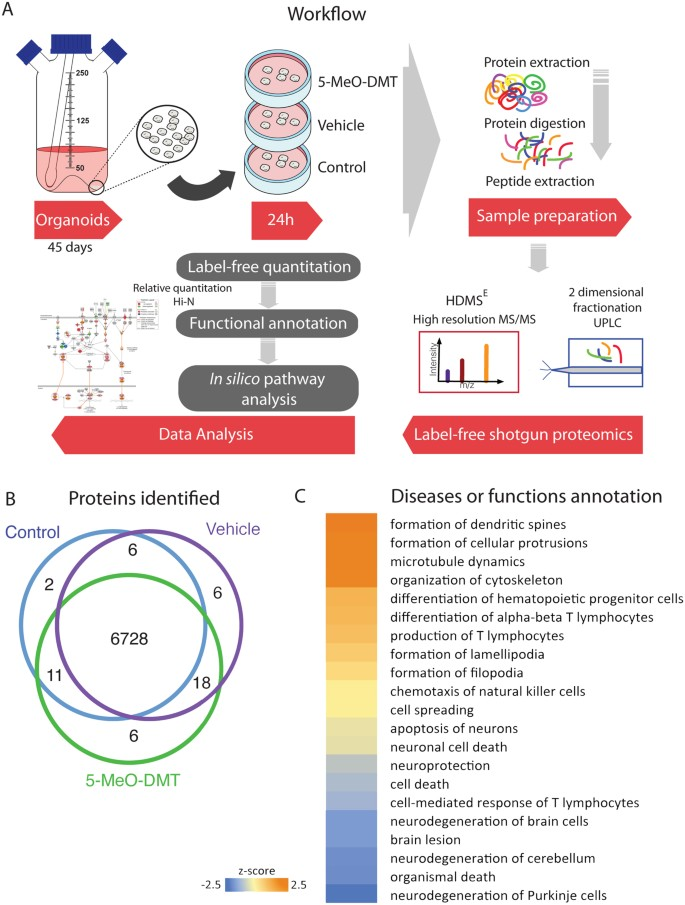Short term changes in the proteome of human cerebral