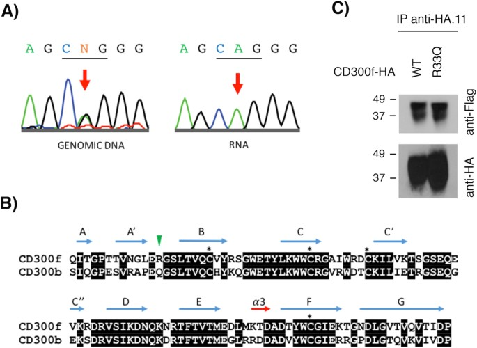 Effect of Specific Mutations in Cd300 Complexes Formation