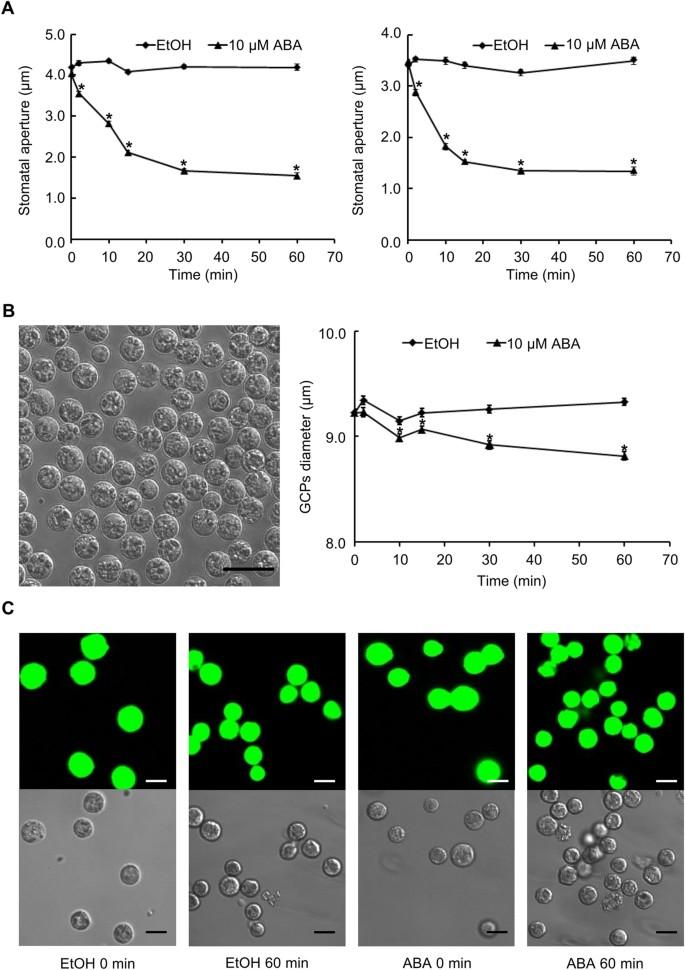 Metabolic Signatures in Response to Abscisic Acid (ABA