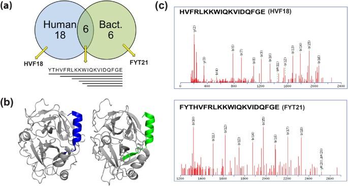 Proteolytic signatures define unique thrombin-derived peptides