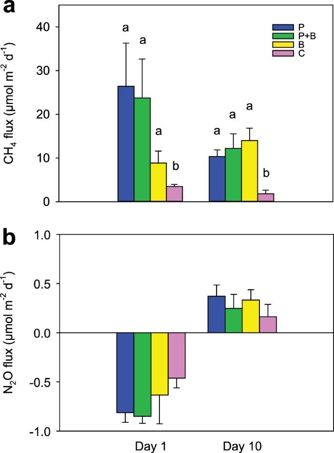 Methane fluxes from coastal sediments are enhanced by macrofauna