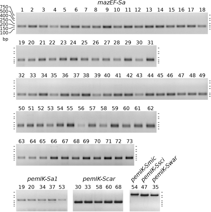 Identification of novel mazEF/pemIK family toxin-antitoxin