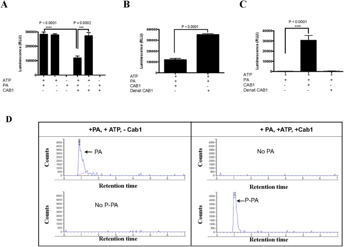 The antimalarial activity of the pantothenamide α-PanAm is