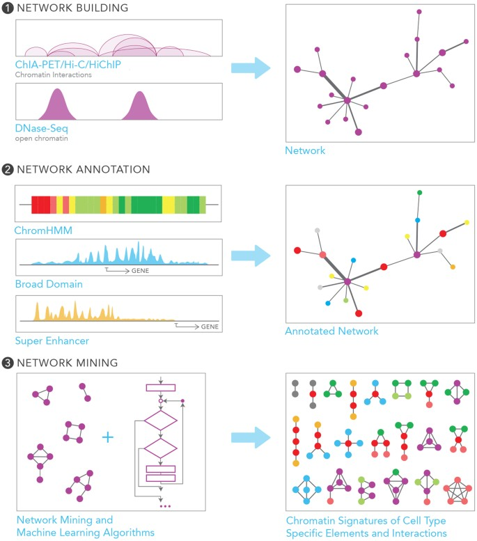 Chromatin interaction networks revealed unique connectivity