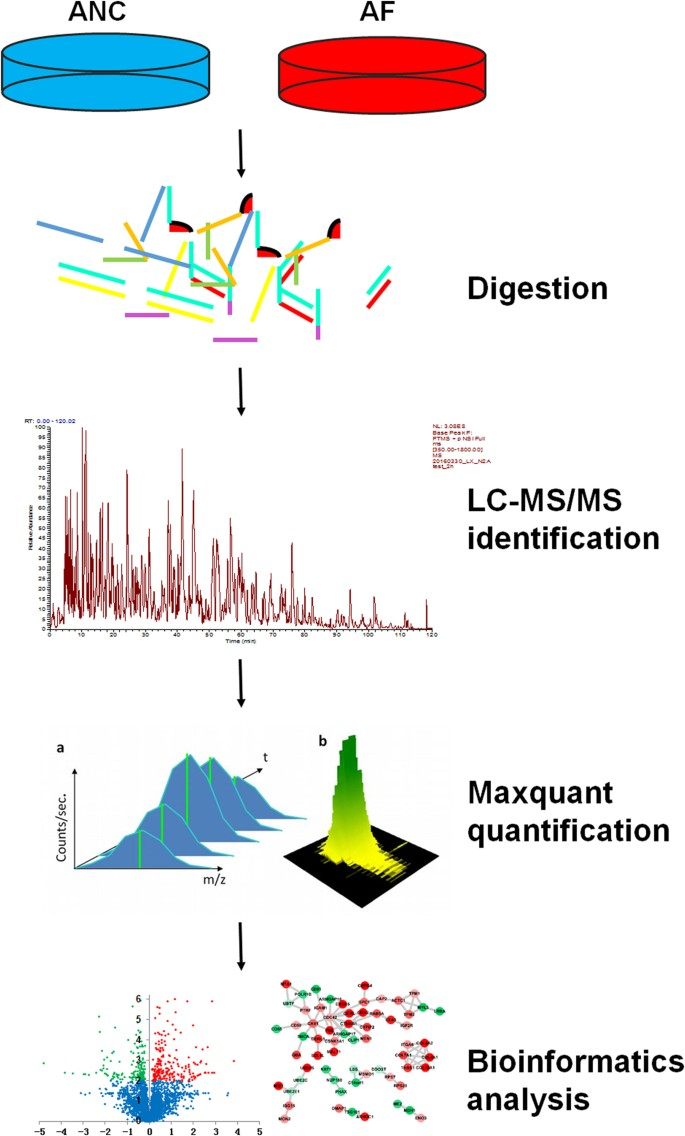 Quantitative proteomic Analysis Reveals up-regulation of