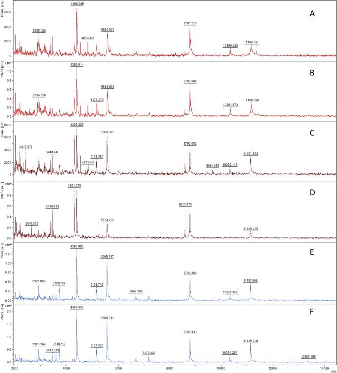 New method for the identification of arbuscular mycorrhizal