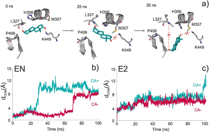 Dynamic changes in binding interaction networks of sex