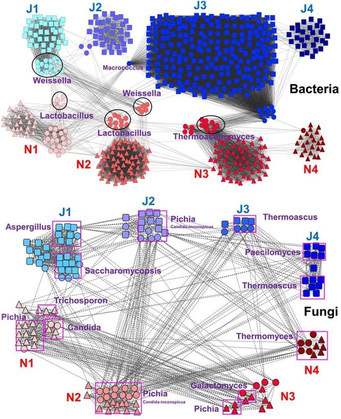 New microbial resource: microbial diversity, function and dynamics