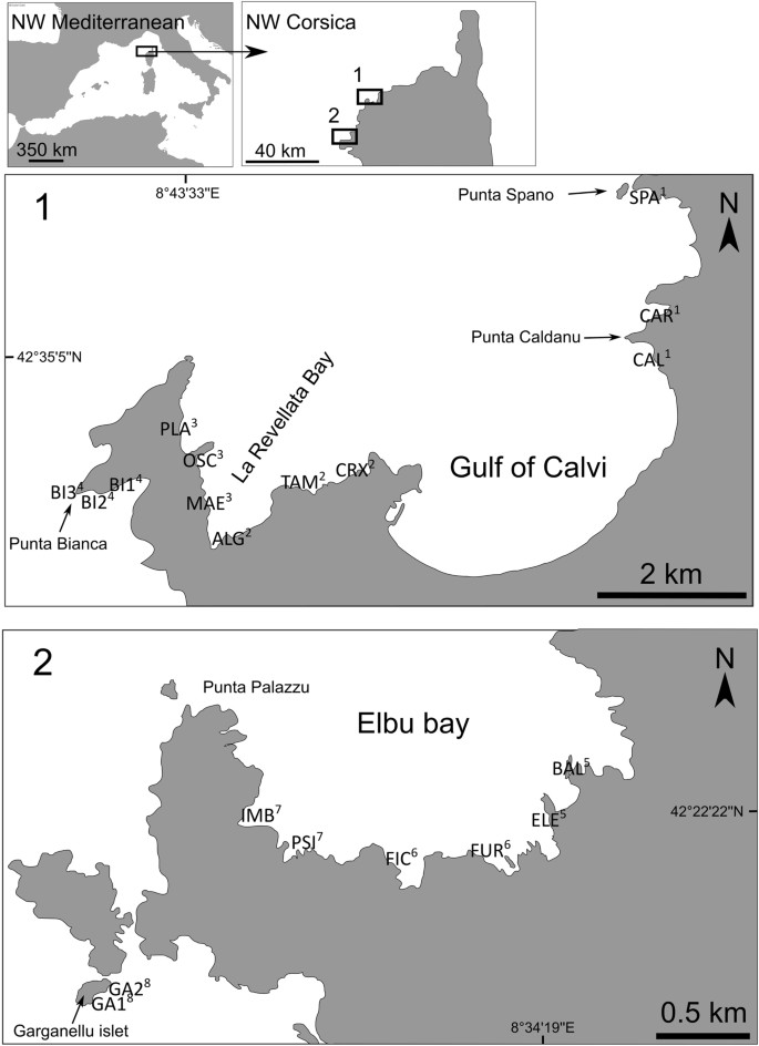 Juvenile fish assemblages in temperate rocky reefs are shaped by the