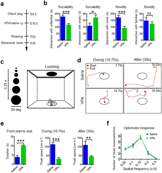 A translational study on looming-evoked defensive response