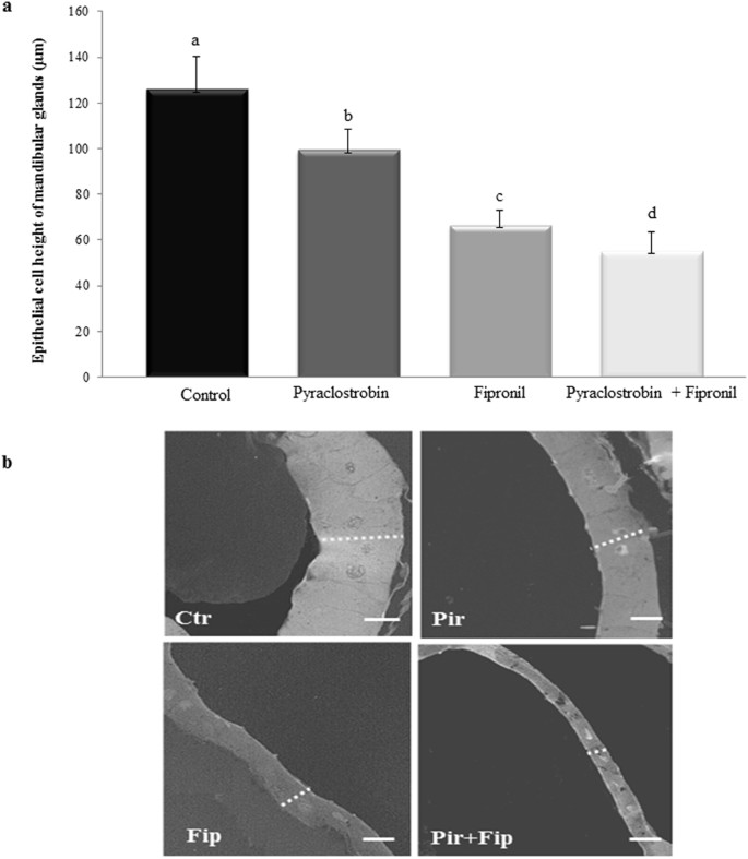 Pesticide Effect On Cells May Resemble >> Field Relevant Doses Of The Systemic Insecticide Fipronil