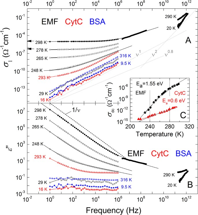 Observation of dielectric universalities in albumin