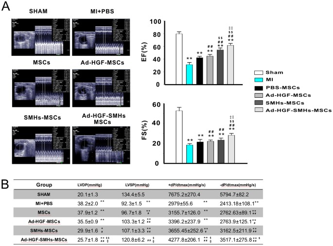 Treatment of Myocardial Infarction with Gene-modified Mesenchymal